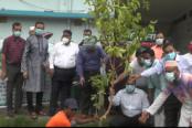 বরিশালে রোটারি ক্লাবের আয়োজনে বৃক্ষ রোপণ