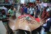 বরিশালে ১৩ মণ ওজনের মাছ বিক্রি করতে মাইকিং