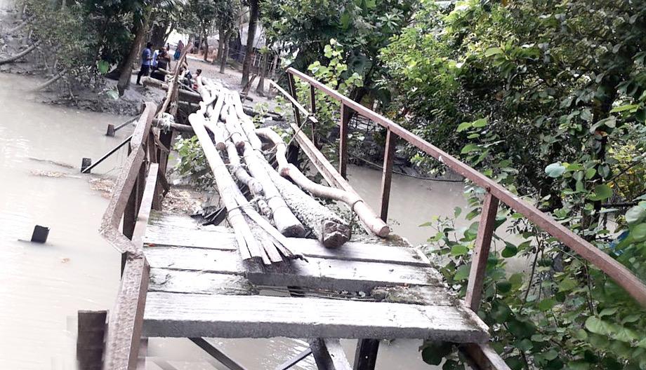 ব্রিজের নেই স্লাব-পাটাতনে সুপারি গাছ!